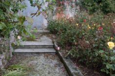 Rose gardens at Powerscourt Ireland