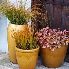 Harvest gold hues-   Orange-striped blades of grass, apricot-tinged leaves with purple undersides, and matching gold containers make for autumn-inspired pots.