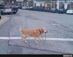 Selbst ist der Hund,wenn Keiner mit ihm Gassi geht! | Lustige Bilder, Sprüche, Witze, echt lustig