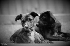 Sibling pups -  facebook.com/Parrottspics