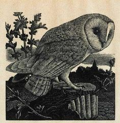 Artwork by Charles Frederick Tunnicliffe, OWL, Made of Woodcut Art And Illustration, Owl Art, Bird Art, Linocut Prints, Art Prints, Block Prints, Mc Escher, Wood Engraving, Artist Art