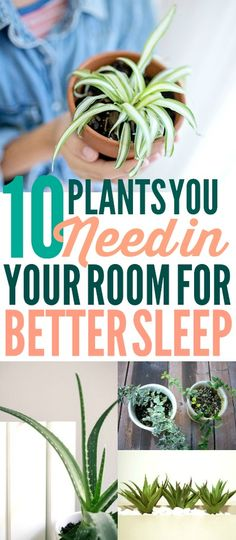 These houseplants for better sleep are SO COOL! I'm so glad I found these GREAT houseplant tips! Now I have some great tips on how to get better sleep! And how to get rid of insomnia! #sleeptips #houseplants #houseplanttips #sleephacks #homehacks #naturalremedies