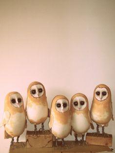 Mister Finch: Barn Owls........... I love these little creatures - deep, dark eyes!
