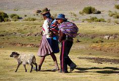 nach getaner Arbeit wurde in Bolivien, Mallcu aufgenommen und hat folgende Stichwörter: Schaf,  Bolivien,  Altiplano.