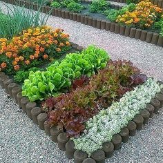 Raised Vegetable Garden Beds Can Be A Great Gardening Option Raised Vegetable Gardens, Vegetable Garden Design, Vegetable Gardening, Garden Tools, Organic Gardening, Gardening Tips, Container Gardening, Gardening Direct, Gardening Shoes