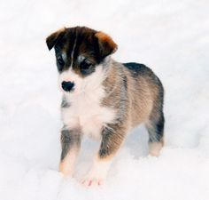 Cute Puppy-I want *this* one.