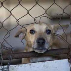 Lo sconvolgente piano del Governo per risolvere il problema del randagismo in Italia Il prossimo 23 febbraio il Governo Italiano, ha intenzione di approvare un documento in cui oltre all'abbattimento del 5% dei lupi italiani, approverà anche l'uccisione dei cani detenuti in canile #politica #randagismo #cani #animali