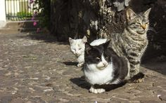 Tax Deduction: http://finance.yahoo.com/news/believe-not-tax-deductions-170327061.html?soc_src=mediacontentsharebuttons&fb_ref=Default  A woman used her own money to care for feral cats that she fostered in her home for a charity that specialized in the neutering of wild cats that she can claim a charitable deduction for her expenses, but limited her write-off because she didn't meet the substantiation rules.
