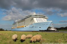 Quantum of the Seas ships out past the locals.