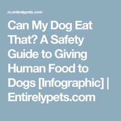 Can My Dog Eat That? A Safety Guide to Giving Human Food to Dogs [Infographic] | Entirelypets.com