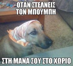 Greek Memes, Funny Greek, Manado, Animals And Pets, Funny Animals, Very Funny, Little Monsters, Beach Photography, Funny Posts
