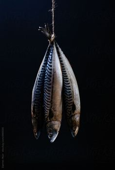 Stock photo of Mackerel. Three mackerel fish hanging from a piece if twine. Mackerel Fish, Raw Photography, Seafood Buffet, Light Study, Still Life Photographers, Fish Art, Fish And Seafood, Fish Recipes, Twine