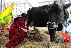 Protestmelken: In allen italienischen Großstädten demonstrieren italienische Milchbauern gegen sinkende Preise und den Ende März geplanten Wegfall der Milchquoten in der EU. In Rom wurden Kühe in Anwesenheit mehrerer Minister gemolken. 2004 sei der Preis, den Milchbauern für einen Liter Milch bekommen, um 20 Prozent auf 0,35 Cent gegenüber dem Vorjahr gesunken. 32.000 verloren ihr Jobs. Mehr Bilder des Tages auf: http://www.nachrichten.at/nachrichten/bilder_des_tages (Bild: epa)