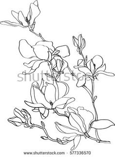 how to draw a freesia