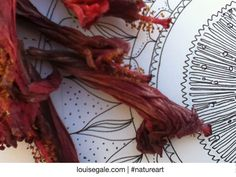 Mandala doodle and gorgeous hibiscus buds in my sketchbook. #sketchbook #natureart #macro