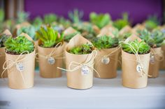 Succulant wedding favors
