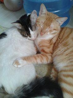Frajola & Teddy ♥