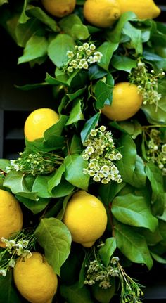 Pretty Lemon Wreath Close-up. I think I need a lemon wreath Fruit And Veg, Fruits And Veggies, Fresh Fruit, Vegetables, Oranges And Lemons, For Love And Lemons, Lemon Wreath, Beautiful Fruits, Delicious Fruit