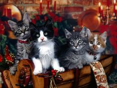 Sweet Christmas kittens. For more visit, https://www.facebook.com/funholidaycats