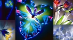 Auras : La science des auras et de l'énergie