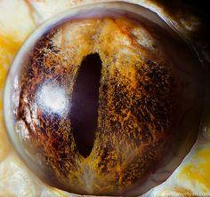 Impresionantes fotografías de ojos animales magnificados | Pijamasurf