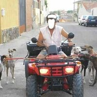 Don't Legalize Training o Galgos with Motor Vehicles in Castilla La Mancha | So many dogs have been killed and maimed with this cruelty. Please SIGN and share petition. Thanks