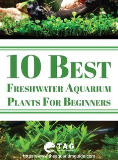 10 Best Freshwater Aquarium Plants For Beginners. 10 Best Freshwater Aquarium Plants For Beginners. Planted Aquarium, Aquarium Fish Tank, Fish Tanks, Live Aquarium, Fish Aquariums, Tanked Aquariums, Freshwater Aquarium Plants, Tropical Freshwater Fish, Tropical Fish