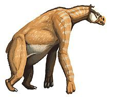 Chalicotheres (chalix = gravel, therion = beast) had long forelimbs and short hind limbs. Consequently, chalicotheres probably moved with most of their weight on their short, strong hind legs. Their front legs had long, curved claws indicating they knuckle-walked like giant anteaters today. Fossil remains have shown thick, developed front knuckles, much like gorillas