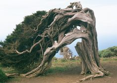 this tree is AWeSOME!