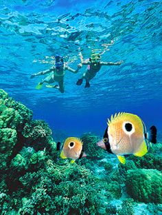 Best Beaches to Snorkel in Kauai  Anini - longest reef on island,shallow h20, north shore Poipu-reef, sea cucumbers, monk seals,south shore Tunnels beach - makua beach, mtn views bright corals and fish kee beach - lagoon protected from waves by reefs