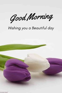the-best-good-morning-images-hd-wishes-with-flowers