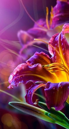 New amazing flowers pics every day, be the first to see them! Fantastic flowers will make your heart open. Exotic Flowers, Amazing Flowers, Beautiful Flowers, Beautiful Gorgeous, Purple Flowers, Fresh Flowers, Day Lilies, Flower Power, Planting Flowers