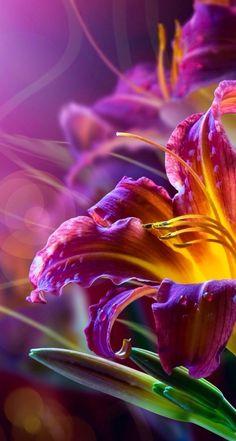 ❈ Fleurs Foncées ❈ dark art photography flowers botanical prints - daylilies