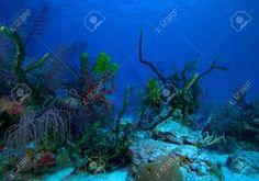 Resultado de imagem para arrecifes de coral cuba
