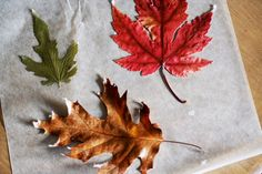 Thanksgiving Week! How to Make Waxed Leaves