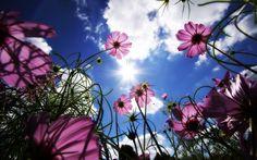 zdjęcia kwiatów na pulpit - Szukaj w Google