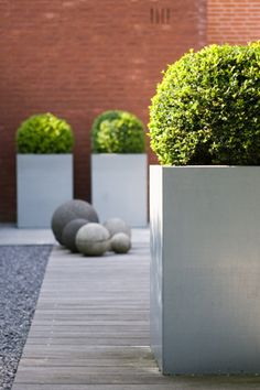 claar ontwerpburo | modern planter + boxwood