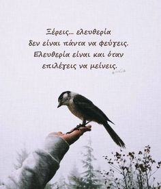 Live In The Present, Greek Quotes, True Words, Picture Video, Favorite Quotes, Me Quotes, Inspirational Quotes, Wisdom, Life