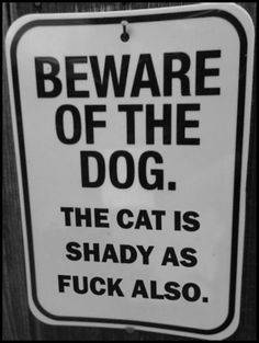 beware of the dog, the cat is shady as fuck also, sign, funny, lol