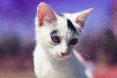 Source: Flickr / emrempire - http://www.flickr.com/photos/emrempire/6211305684/