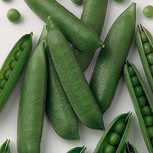Icebreaker Pea | Garden/Shelling | Peas | Vegetable Seed O-R | Vegetable Seed | R.H. Shumway's