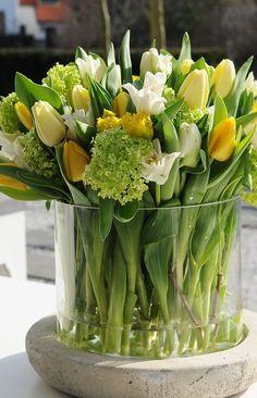 natasha1200-blog: chasingrainbowsforever: Tulips natasha1200-blog
