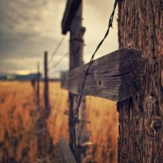 Photos by Nate Cowlishaw. Pancake Lens, Photo Tree, Landscape, Photos, Country, Pictures, Photographs, Picture Tree