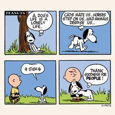 A dog's life...