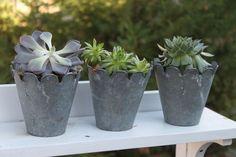 Aha moment...I have succulents, I have aluminum pots...I can do this, tomorrow!