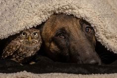 De chouettes photos où un chien et un hibou posent côte à côte
