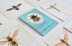 kolekcja pocztowek z owadami
