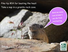Stay cool, California! From the Yosemite pikas!