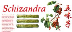 What is schizandra good for