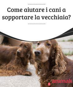 Come aiutare i cani a sopportare la vecchiaia?   I #cani invecchianoin modo esponenzialmente più veloce al nostro.Si dice che la #vecchiaia dipenda della taglia del cane. #Salute